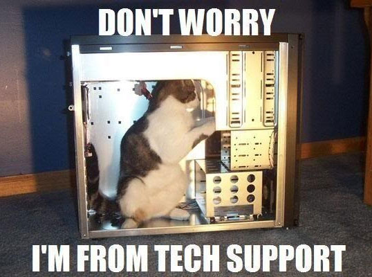 funny-cat-fixing-computer-CPU